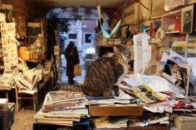 Vanessa Livraria Libreria Acqua Alta in Venice, Italy. Cats roam the bookshop as well.